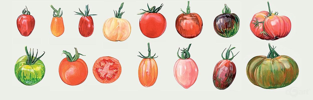 西红柿水彩画法